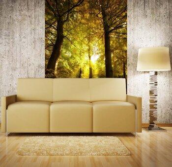 Фотообои на стену Осенний пейзаж с болотом и елями