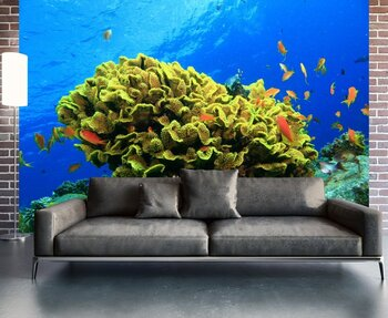 Фотообои на стену coral-05011034