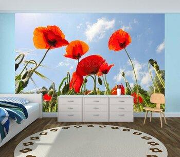 Фотообои на стену Летняя поляна с маками