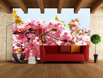 Фотообои Soft pink Japanese cherry-tree blossom. Sakura. Prunus serrulata