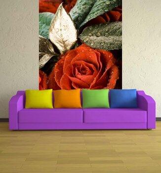 Фотообои на стену Красная роза