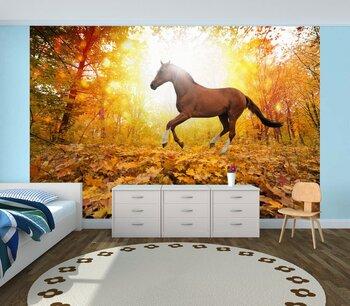 Фотообои Лошадь в осеннем парке