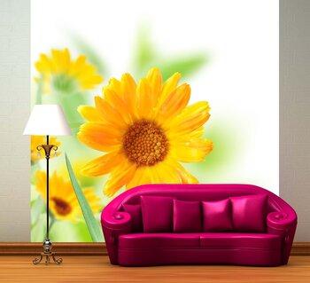 Фотообои  Цветки календулы.