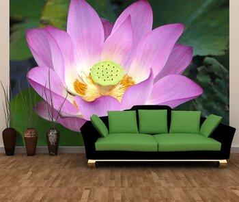 Фотообои на стену Хризантема в осеннем саду