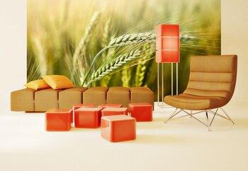 Фотообои Колосья пшеницы